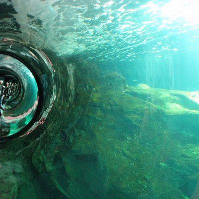 ... aquarium de La Rochelle...