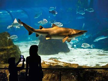 L aquarium de Barcelone