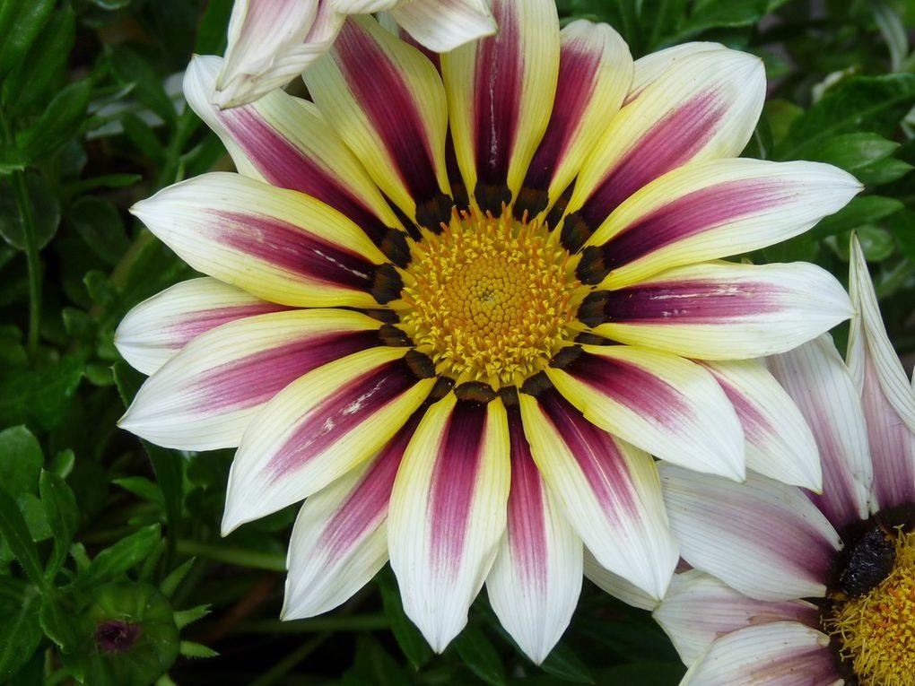 Fleurs 77