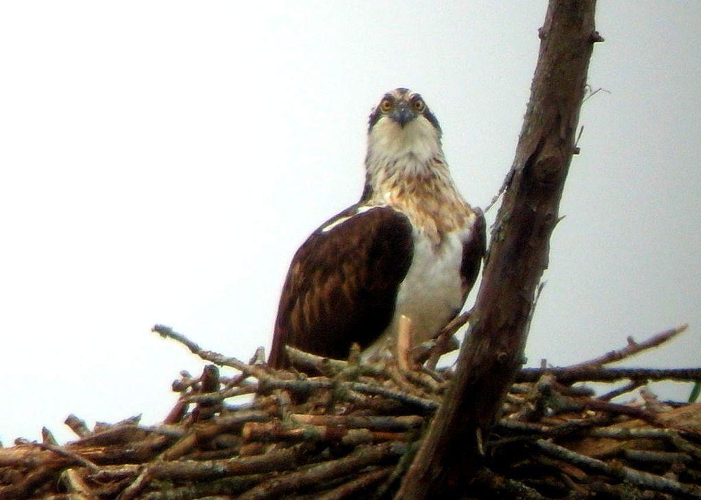 Balbus en vue... Et Balbu sur nid