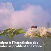 Des dérogations à l'interdiction des néonicotinoïdes se profilent en France