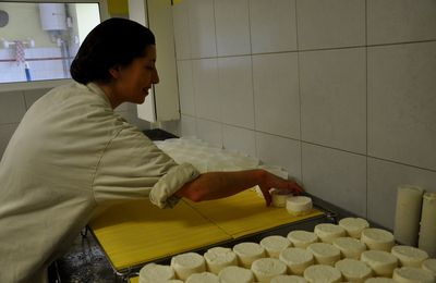 Reportage à la chèvrerie d'Opoul