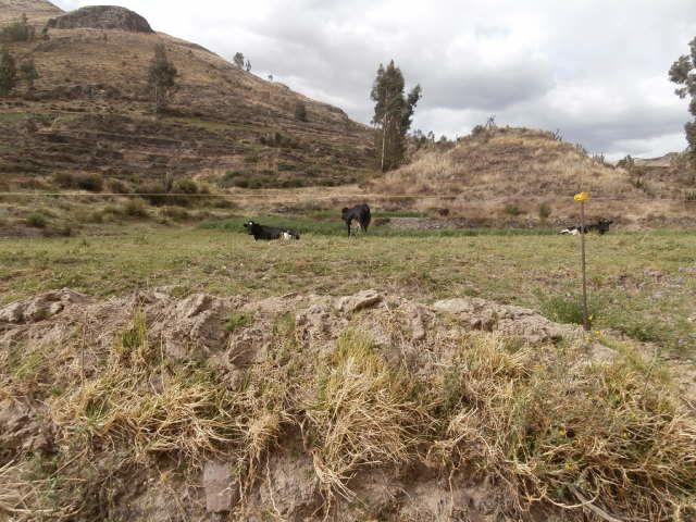 entrée dans canyon del colca par yanque 3 jours chez l Habitant (Teodoro et Justina)