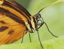 Photos - macro - Insectes de P à R