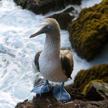 Nager aux Galápagos