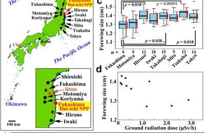 Les papillons mutants de Fukushima : entre manipulation médiatique et illusion statistique, par Wackes Seppi