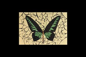 Papillon mosaique