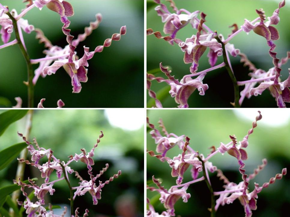 Fleurs du jour (21-21)