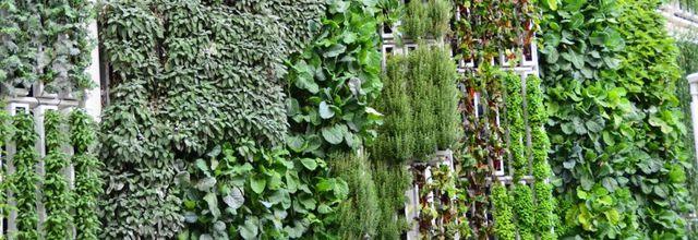 Les jardins verticaux