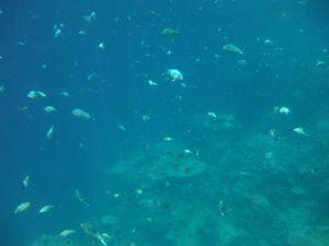 Sous le lagon...