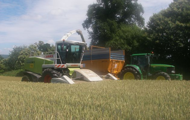 Ensilage coupe directe