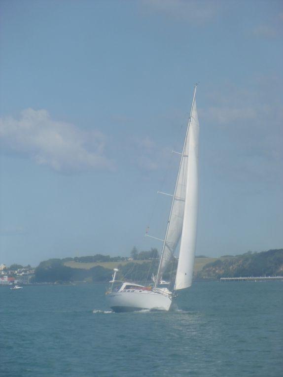 Presque plus de bateaux que d'habitants en Nouvelle Zelande. Escale obligée pour le viiteur: la baie d' Auckland. Bateaux de croisières, voiliers, yachts  et frêles embarcations  s'y côtoient ...l'important est de prendre le large !