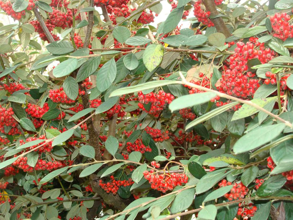 Fleurs--champignons--arbustes