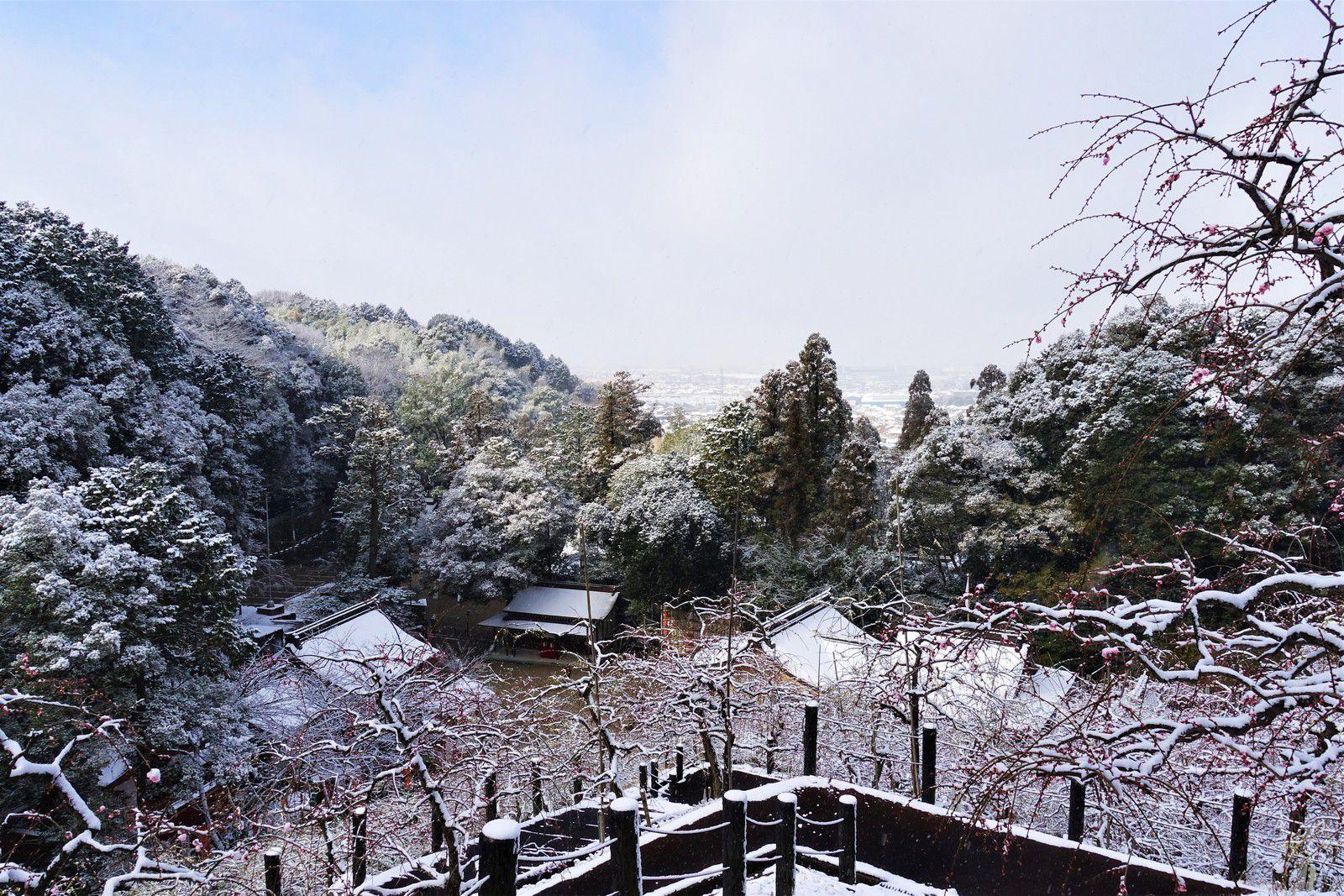 Les abricotiers du Japon - 2021