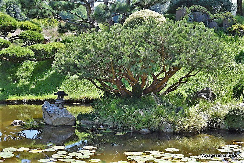 Visite d'un jardin zen...