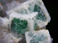 Green Fluorite and Quartz from Guanshang Mine, Guangze Co., Nanping Prefecture, Fujian Province, China (size: Museum)