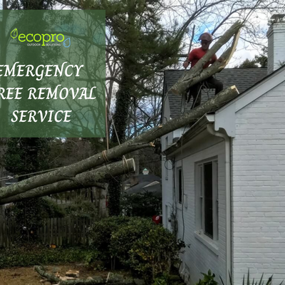 Emergency Tree Removal: You May Want to Consider A Professional