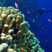 Biologie marine - Wikipédia