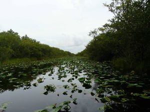 Parc National des Everglades, Floride