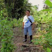 Perú: indígenas tikuna defienden el bosque de las garras del narcotráfico   VIDEOS