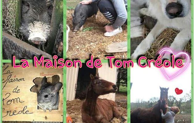 Présentation La Maison de Tom Créole