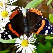 """De moins en moins d'insectes : """"On ne parle pas seulement d'une espèce mais de toute une communauté animale"""""""