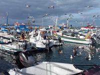 Le bateau d'excursion de Rui, le port de Culatra, paysage marin de parcs à huitres