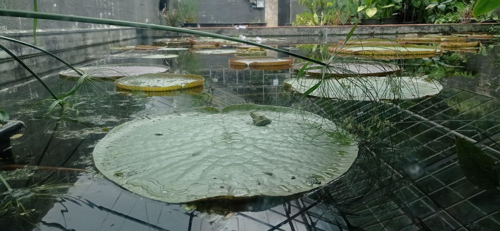 Sortie des CE2 au jardin des nénuphars