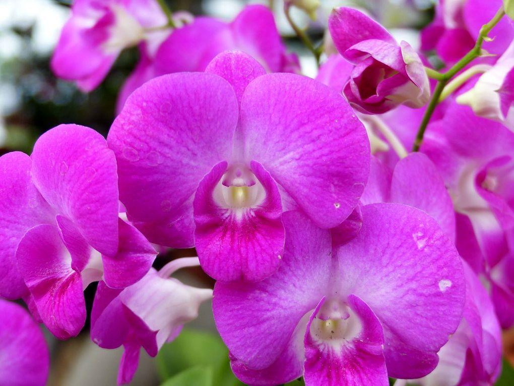 Fleurs du jour (21-16)