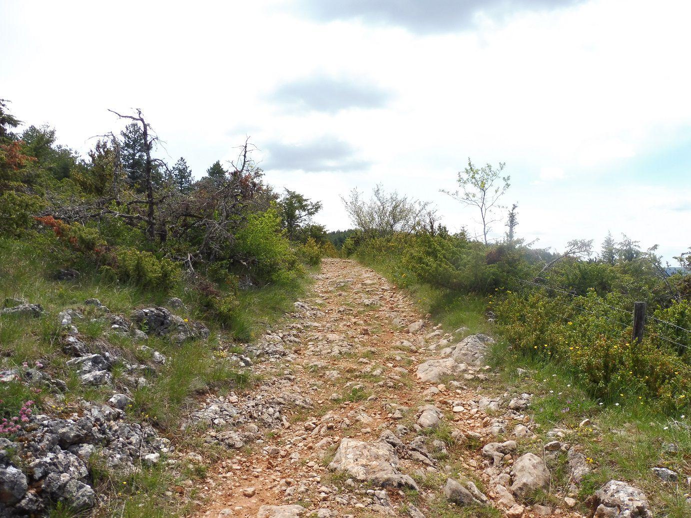 Randonnée à Champerboux (Lozère).