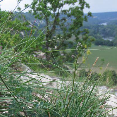 Le site naturel des Coteaux de la Seine