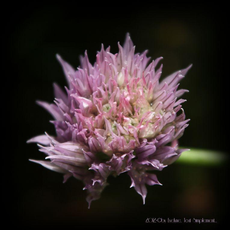 Album - Macro---Fleurs--Plantes--Vegetaux-.