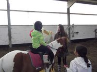 Stage équitation Comines (08/07 - 11/07/2014)