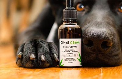 The Truth About CBD Products For Pet