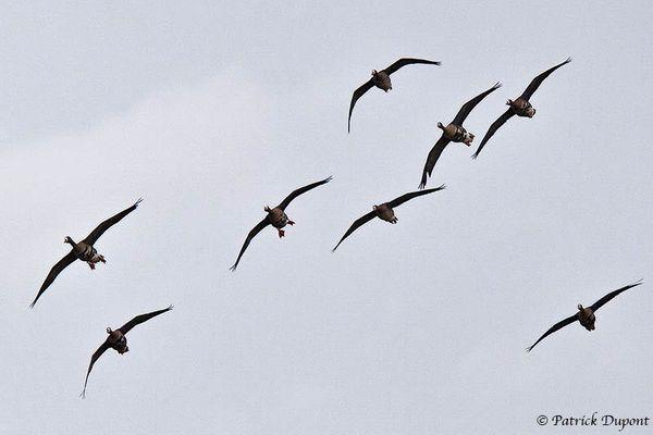 Quelques oiseaux vus au parc du Marquenterre