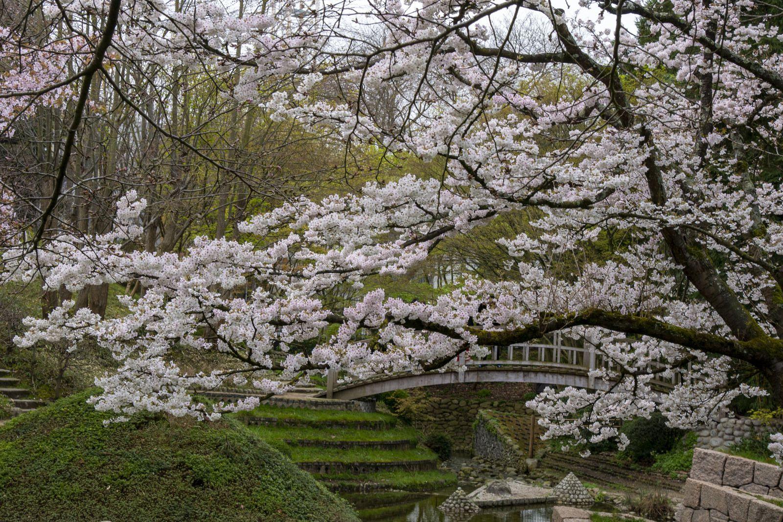 Le jardin d'Albert kahn, un jardin de mondes et d'esprit