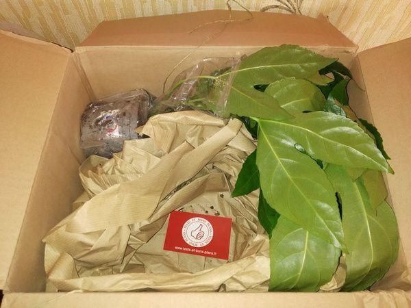 Unboxing box jardinage Takaplanter Box Végétale 100% intérieur @ Tests et Bons Plans