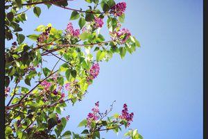 Au printemps, promenons nous dans le jardin sous le soleil! Clap deuxième.