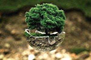 L'écologie à petits pas