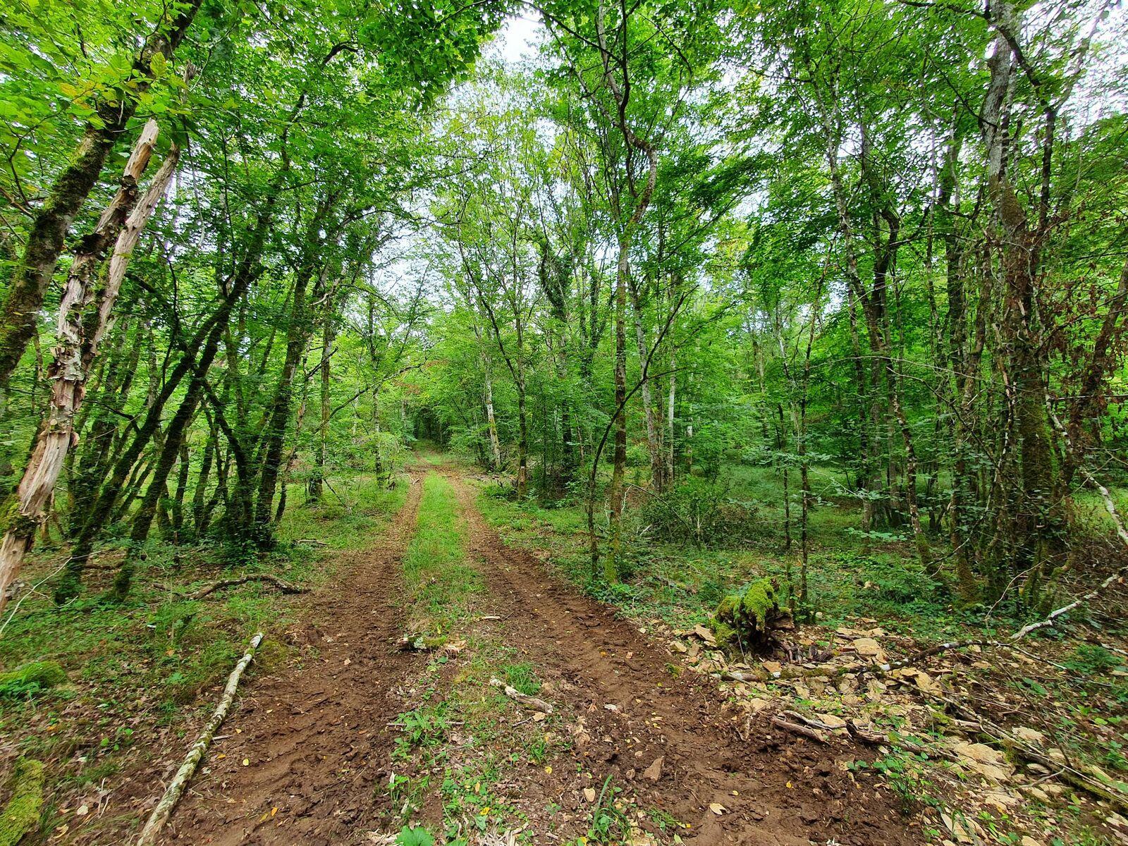 Forêt de Châteauvillain
