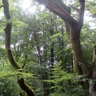 Des racines à la cime