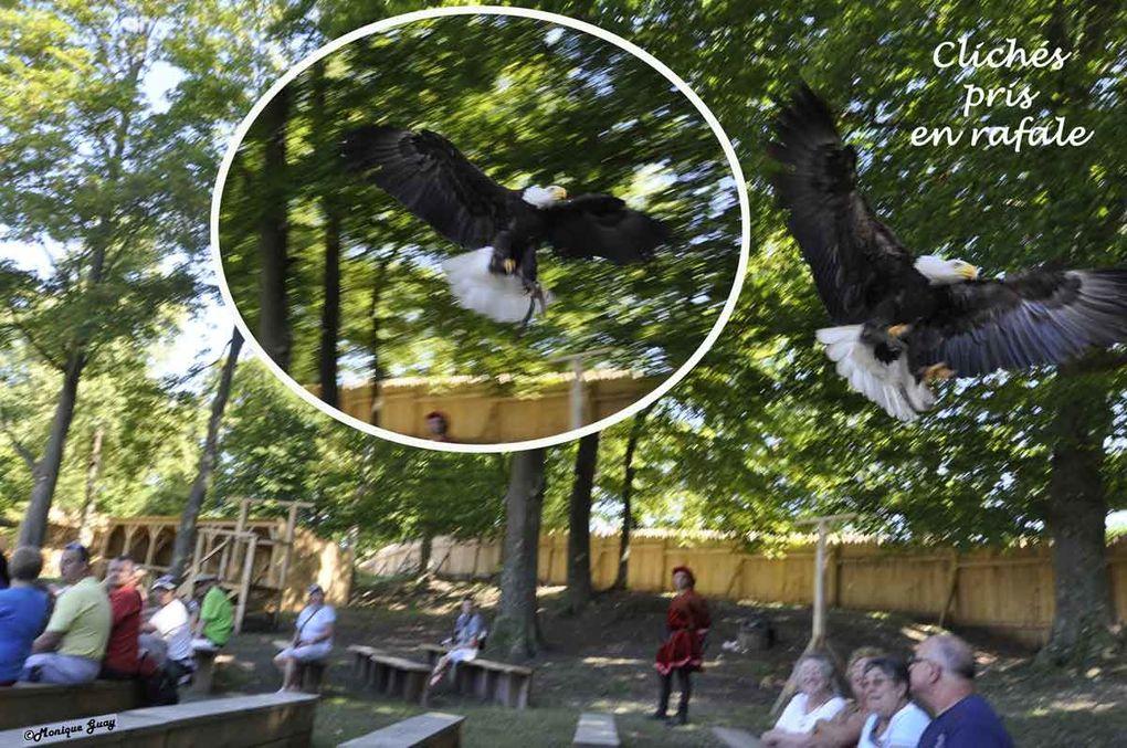 Lors du spectacle et de ma visite de la volerie le samedi après-midi 21 août 2010.