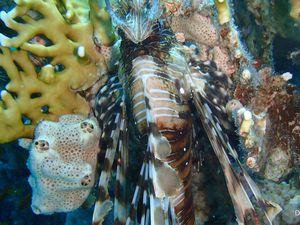 La mer rouge : une faune incroyablement riche !