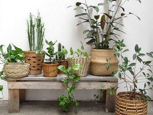 Prendre soin des plantes vertes à l'automne