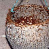 A la chasse aux fourmis - Noy et Gilbert en Thaïlande