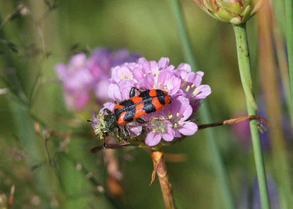 Mini-promenade dans l'immense univers étrange des insectes