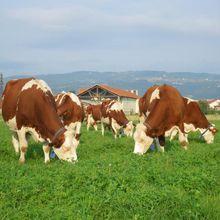 Biodiversité et productivité agricole