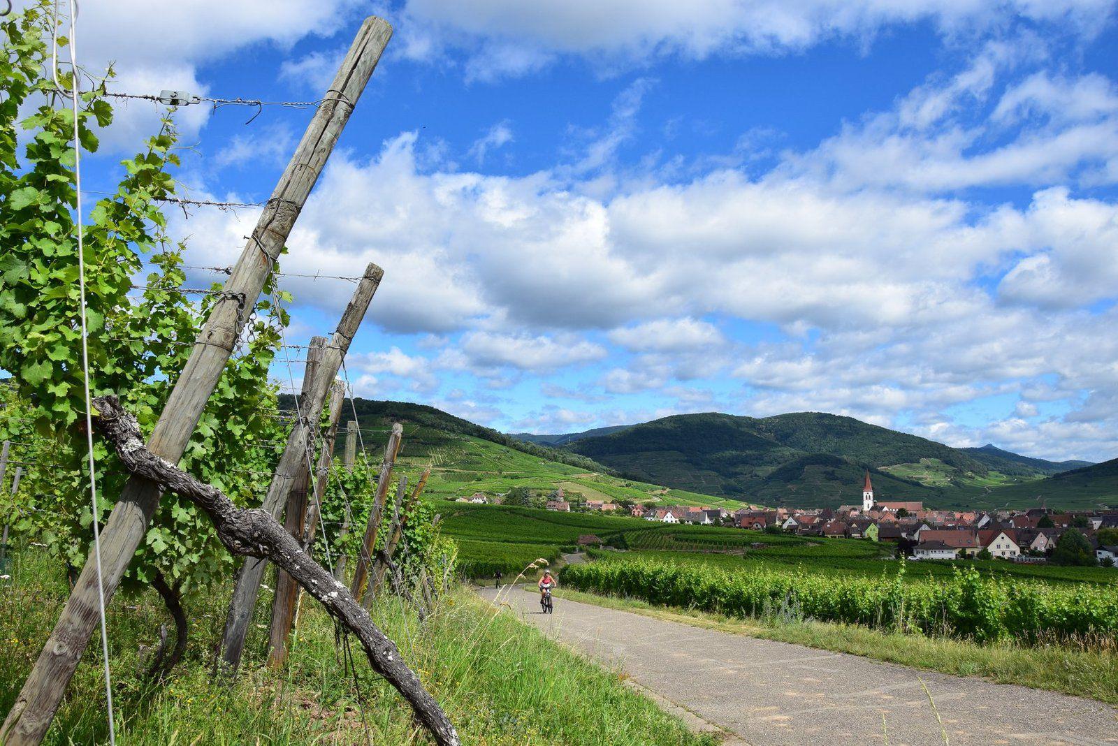 Le vignoble de Ammerschwihr, en passant par le fameux Kaefferkopf