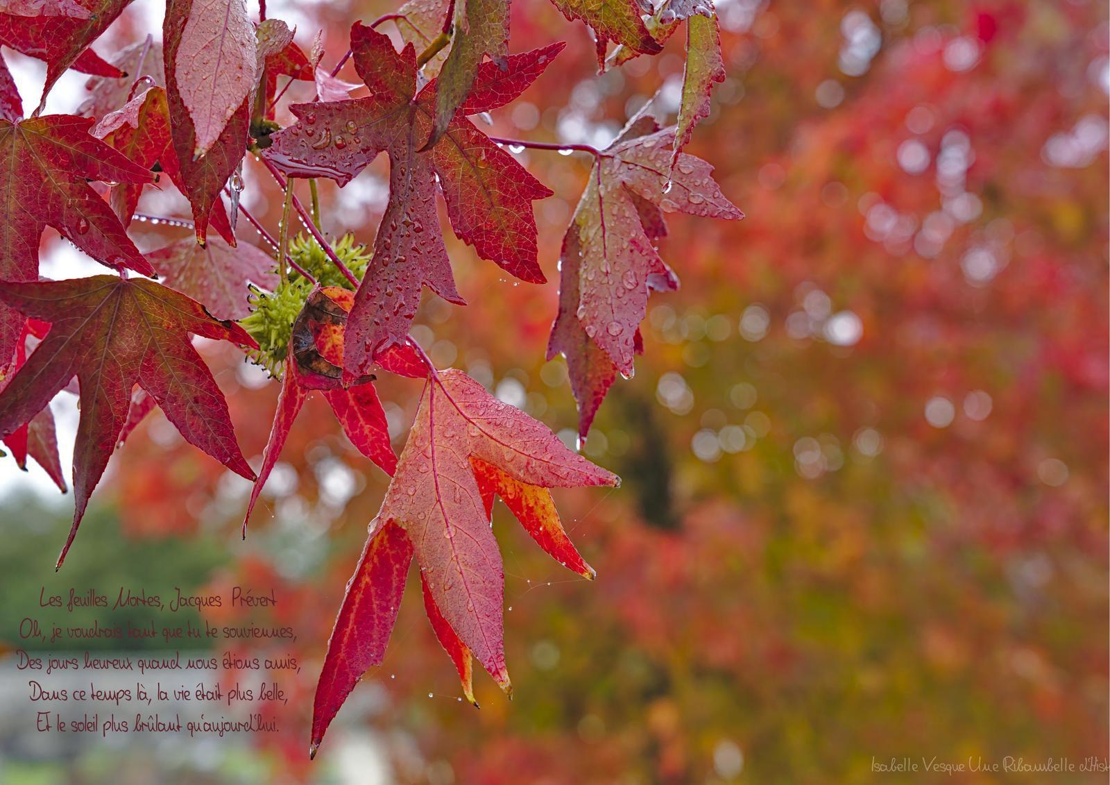 Poésie - les feuilles mortes -