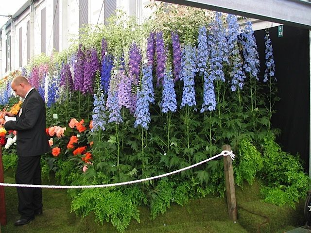 Chelsea Flower Show 2006 - 13 photos